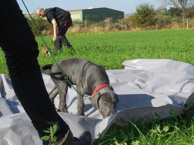 Welpenschule Teampartner-Hund-Hoya 27 http://www.teampartner-hund-hoya.de