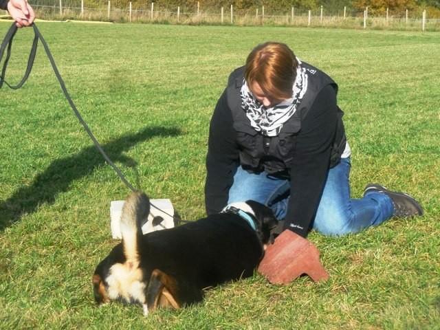 ZOS Seminar mit Hund 28