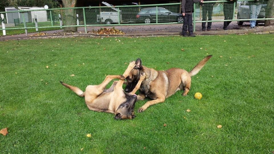 Hundespiel Sky mit Pico Teampartner-Hund-Hoya e.V.