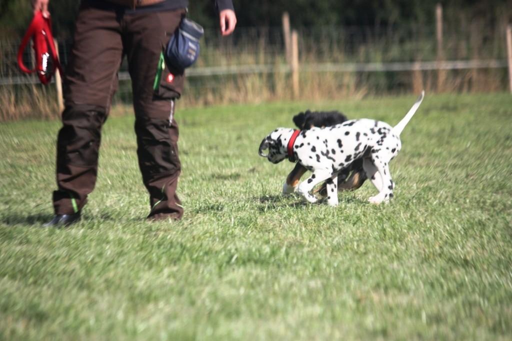 Welpen http://www.teampartner-hund-hoya.de