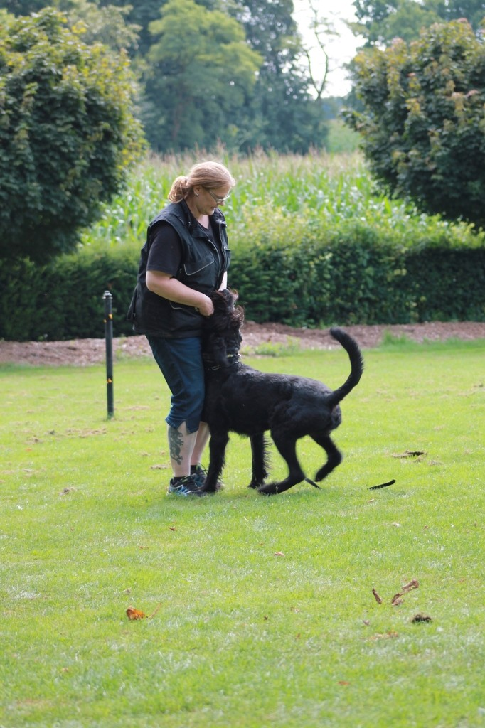 Hundetreffen 31 Teampartner-Hund-Hoya e.V.