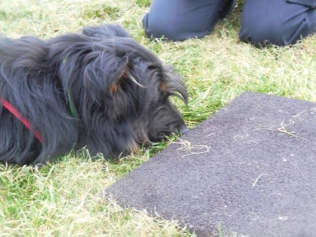 ZOS Seminar mit Hund 11