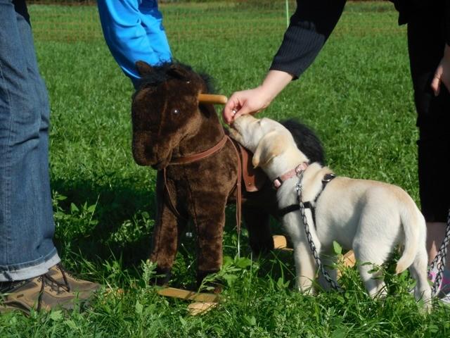 Welpenschule Teampartner-Hund-Hoya 32 http://www.teampartner-hund-hoya.de