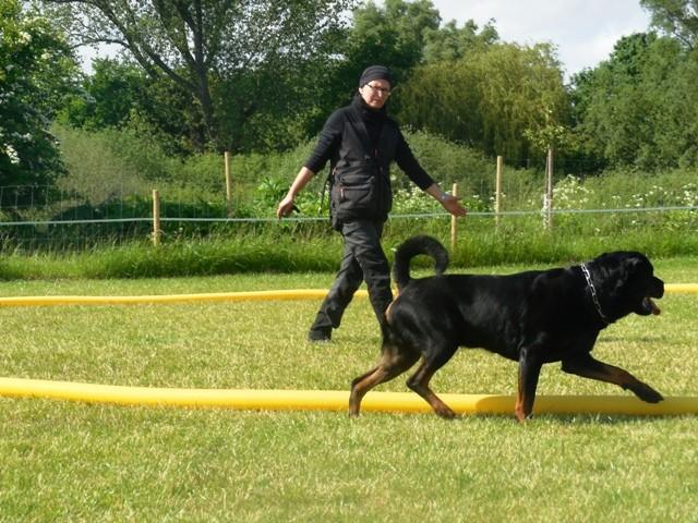 Zirkeln mit Hund 4