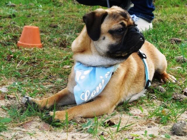 Teampartner-Hund-Hoya e.V bei FBSt Nienburg 10