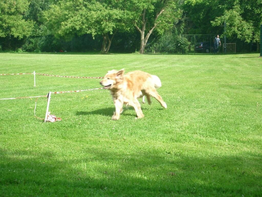 Zirkeln mit Hund 8