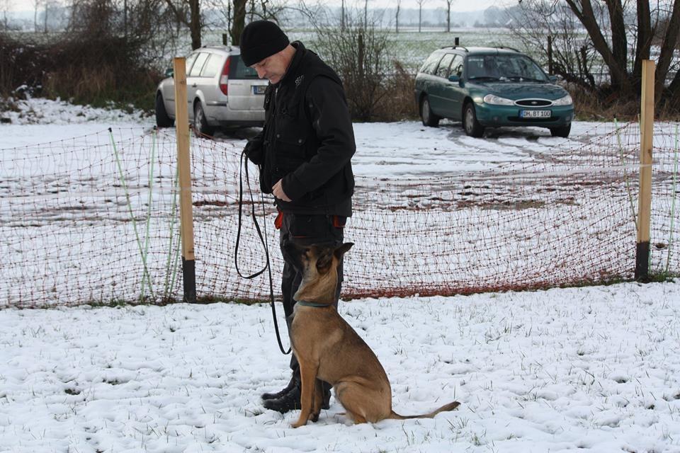 Training Norbert mit Crack Teampartner-Hund-Hoya e.V.