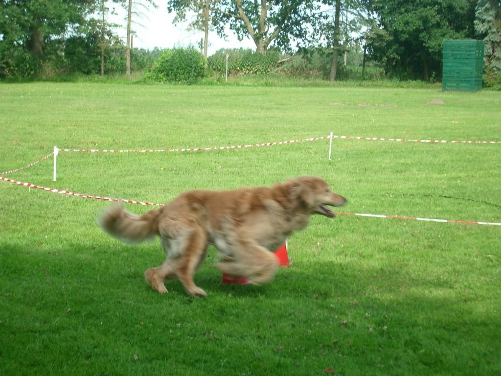 Zirkeln mit Hund 13