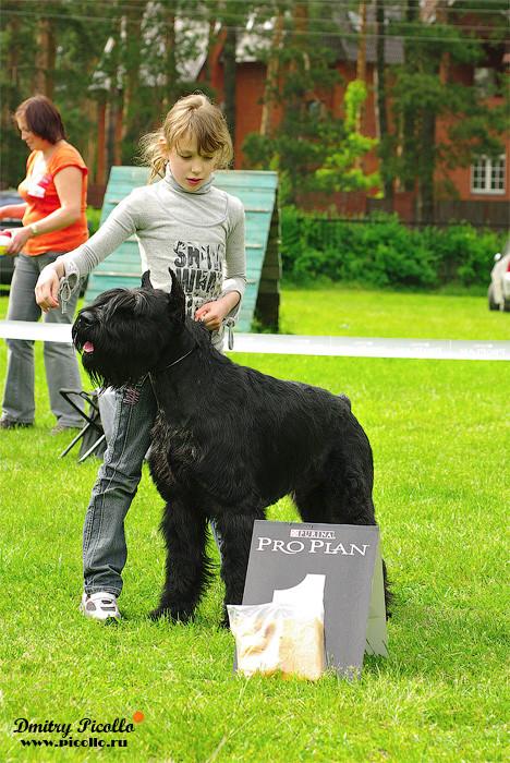 Конкурс ребенок и собака 1