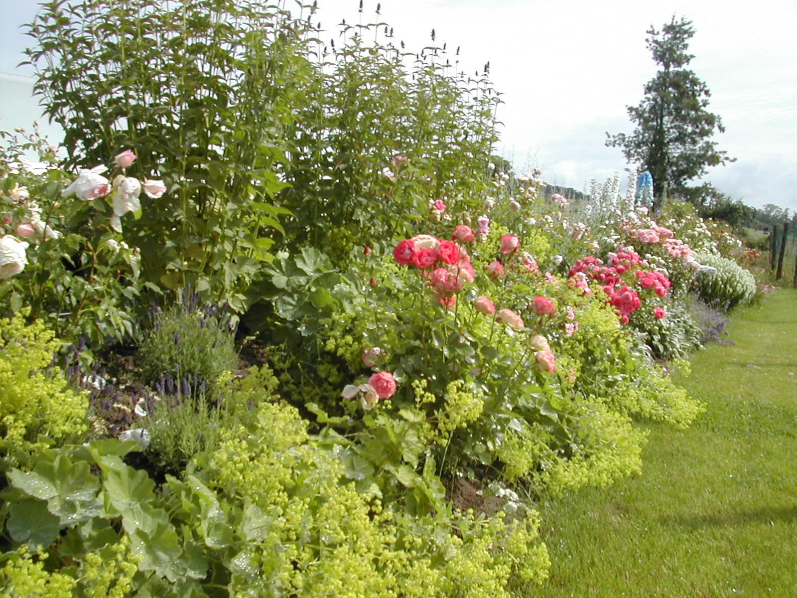 Blick auf die große Rosenrabatte