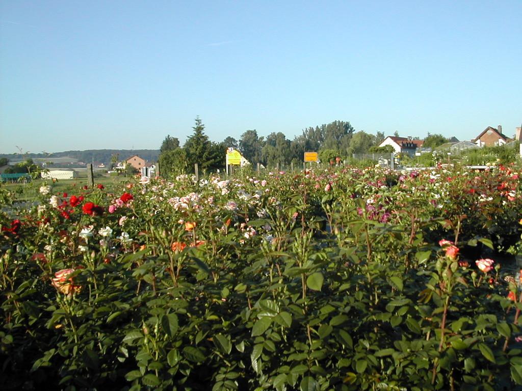 Unser Betrieb liegt direkt am östlichen Ortsrand von Mühlhausen