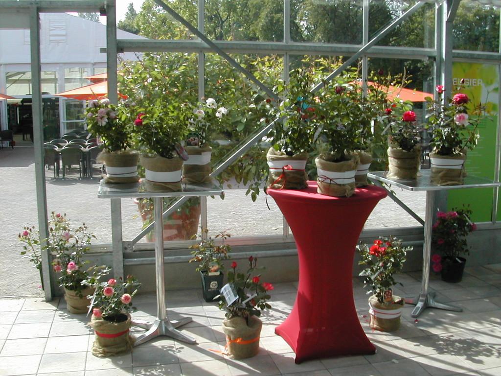 Unsere Rosen schmücken das Forum auf der LGS in Bamberg