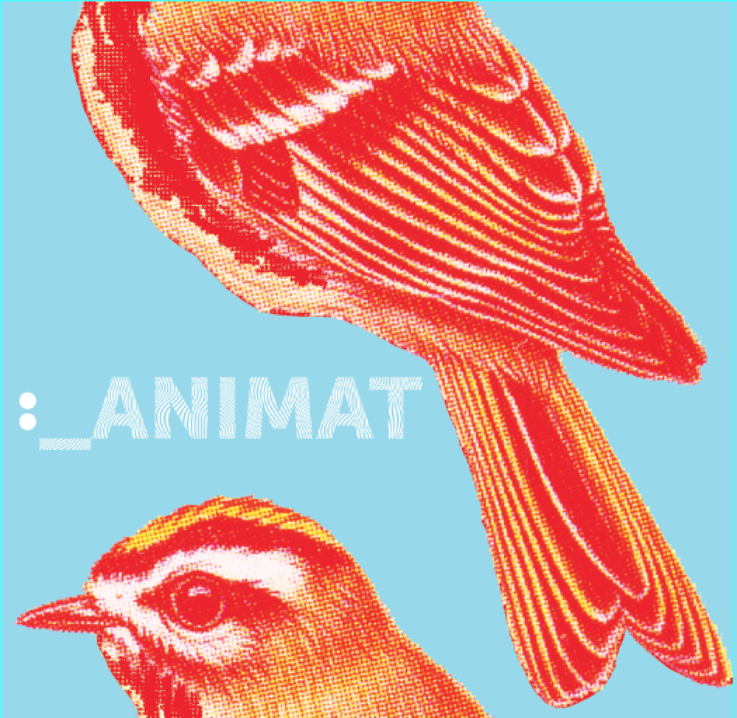 www.animat-music.com