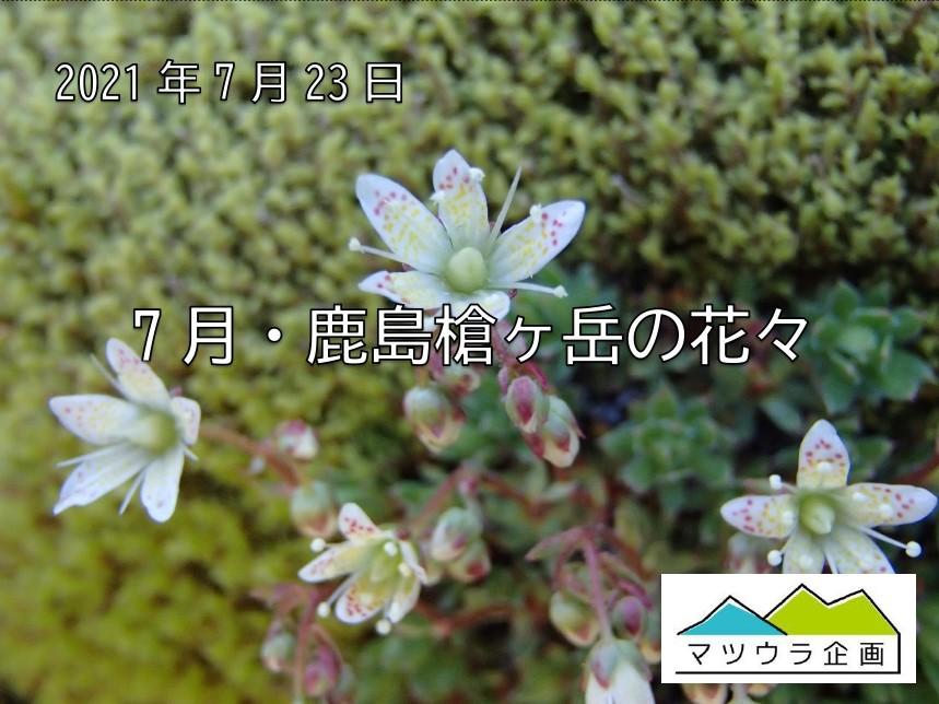 7月・鹿島槍ヶ岳の花々