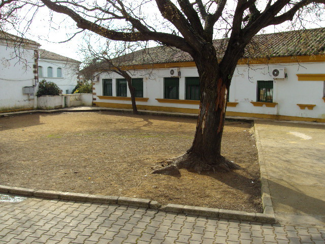 Patio de Segundo Ciclo