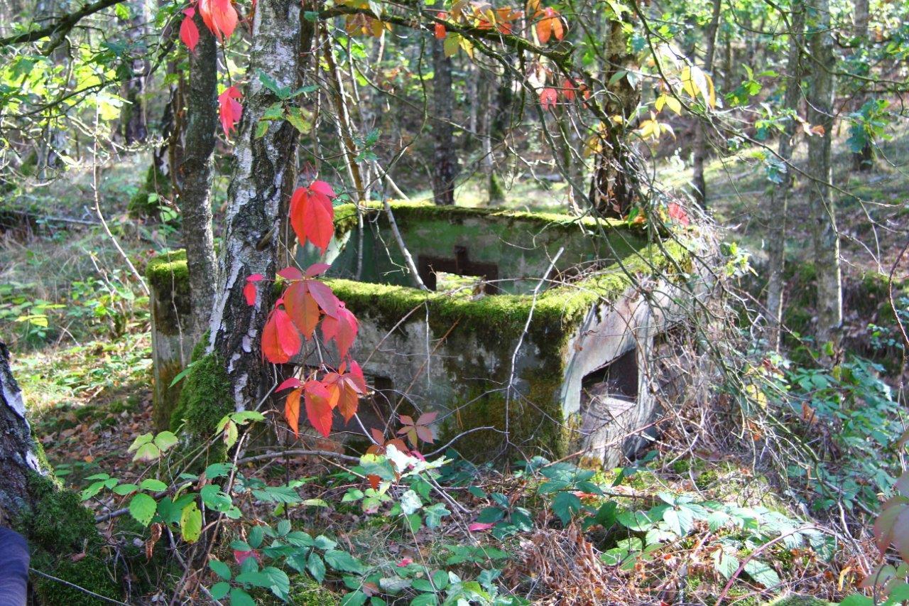 Bunkerreste im Wald von Dahrendorf, c BUND