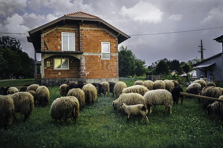 // ADOPTEE PAR KEVIN & MAITE // 40x60 cm - Les Balkans : ville de Bihac en Bosnie