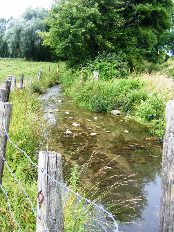 Ruisseau préservé du piétinement
