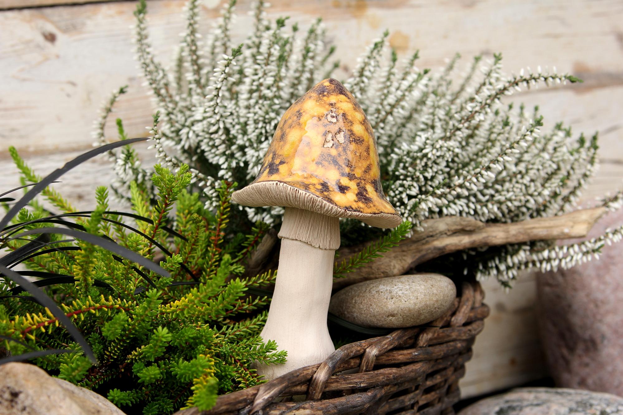 Einpflanzung, Pilze