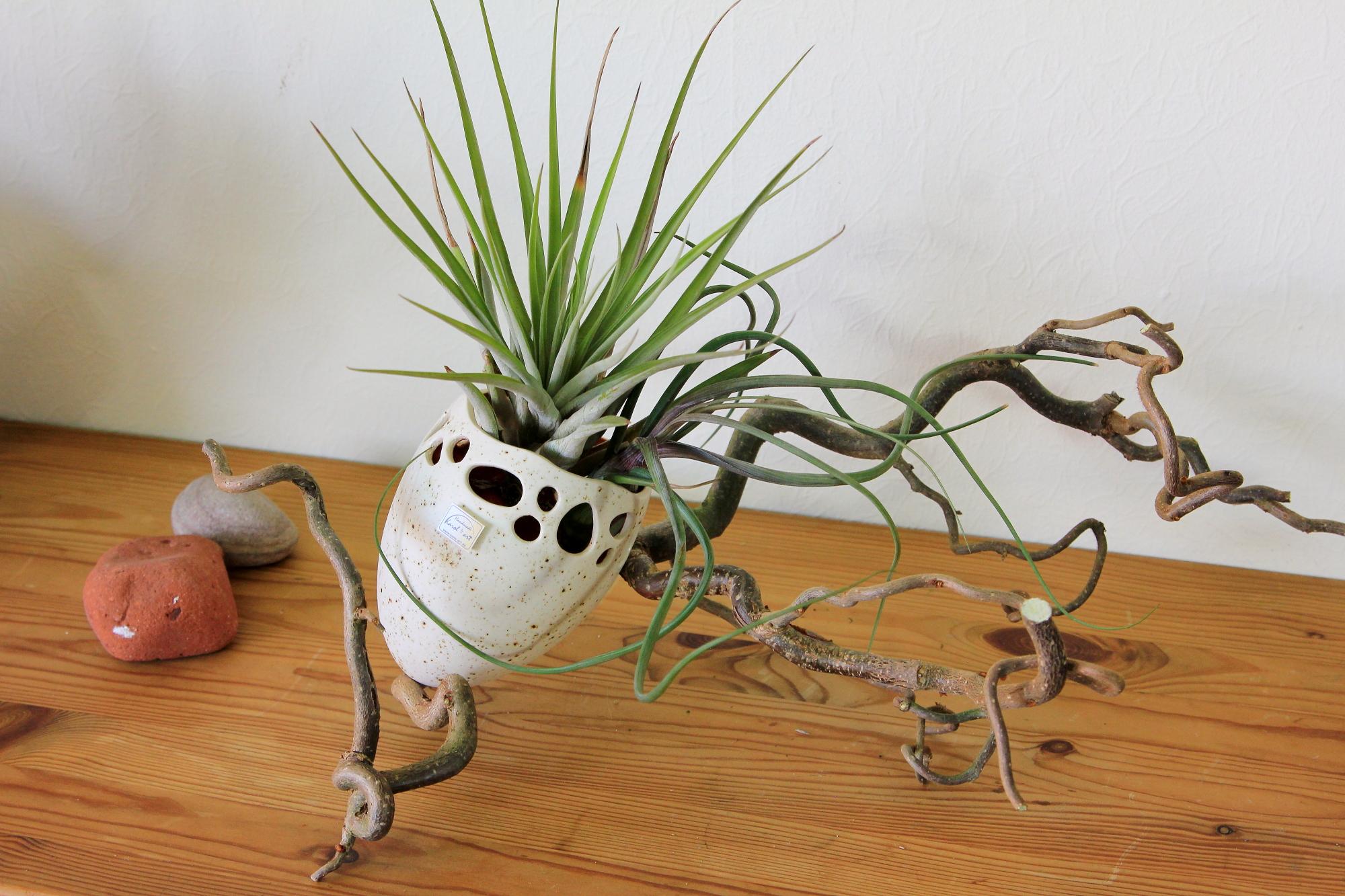 Schale, Blumen, Pflanzgefäß, Tischdekoration