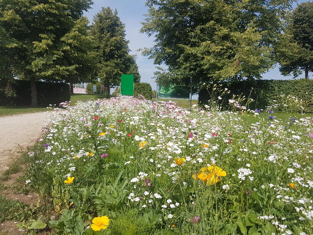 Der Weg zum Abschlag von Bahn 1 ist seit diesem Jahr von einem prächtigen Blumenensemble gesäumt. Schöner kann eine Golfrunde nicht starten.