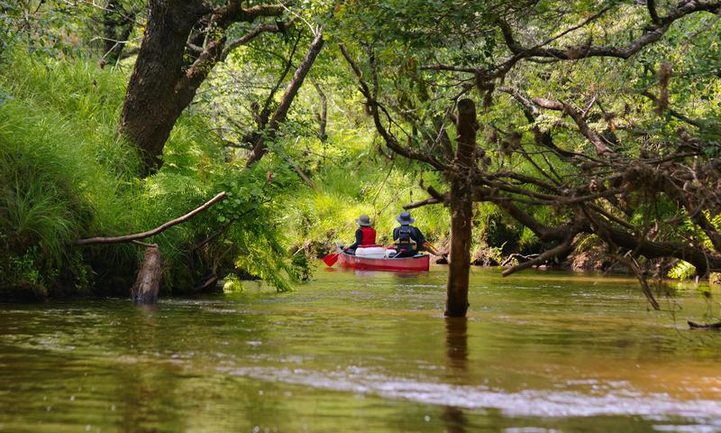 Crédit photo / Parc naturel régional des Landes de Gascogne