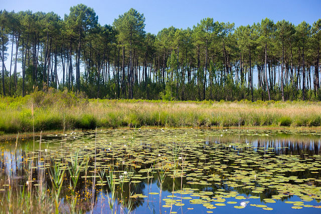 Lagunes du Gât Mort. /Crédit photo: Office de tourisme du Val de l'Eyre.