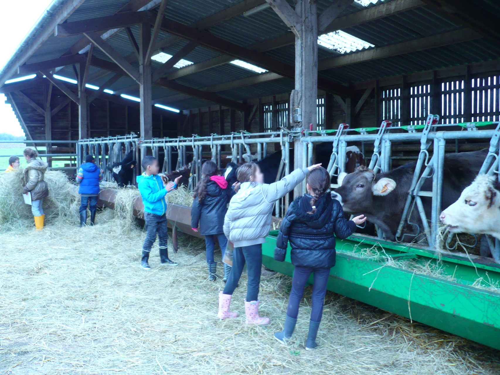 On redonne à manger aux vaches ! C'est plus marrant ! © UNAT Centre
