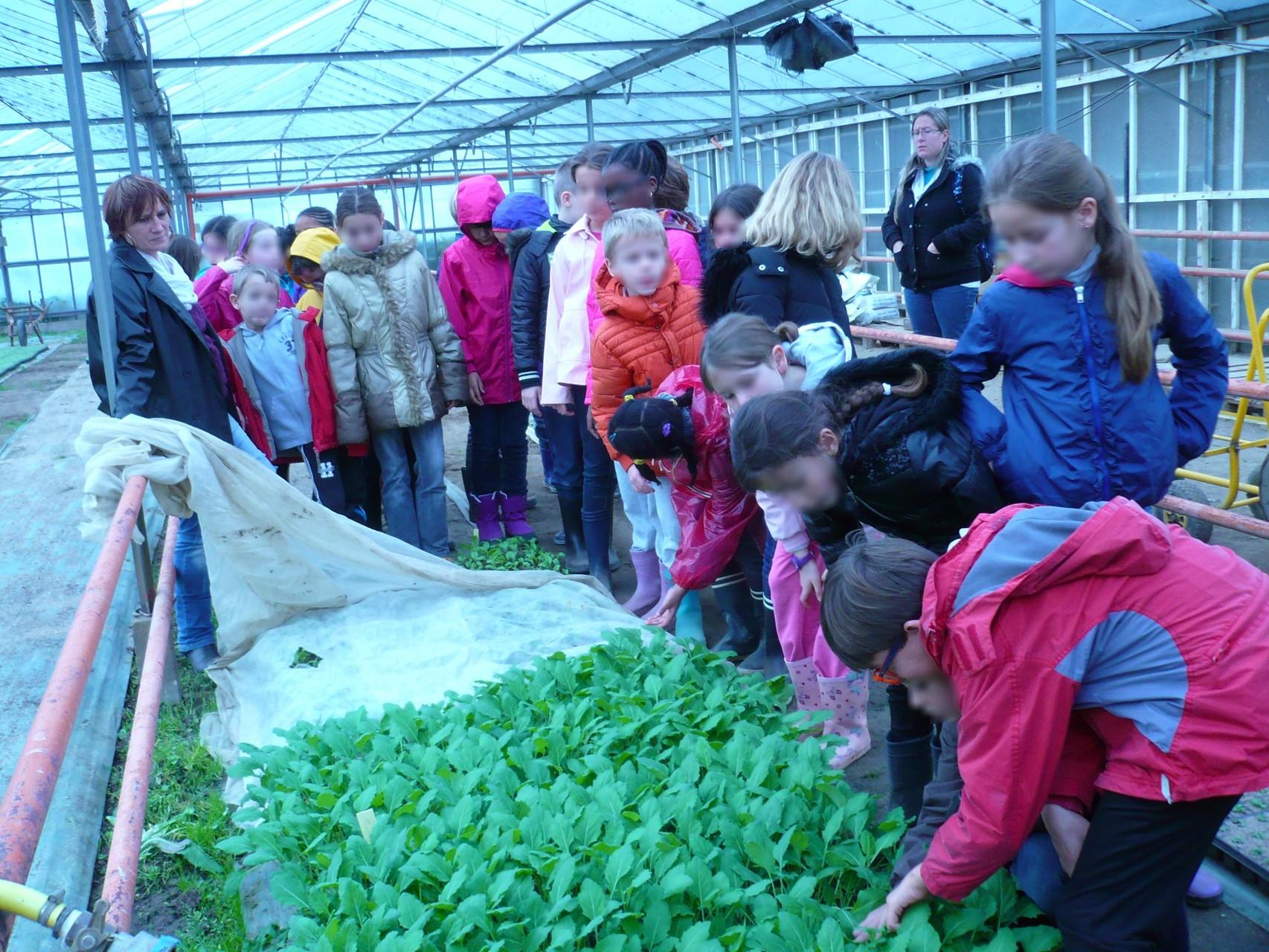 Les jeunes plants de légumes © UNAT Centre