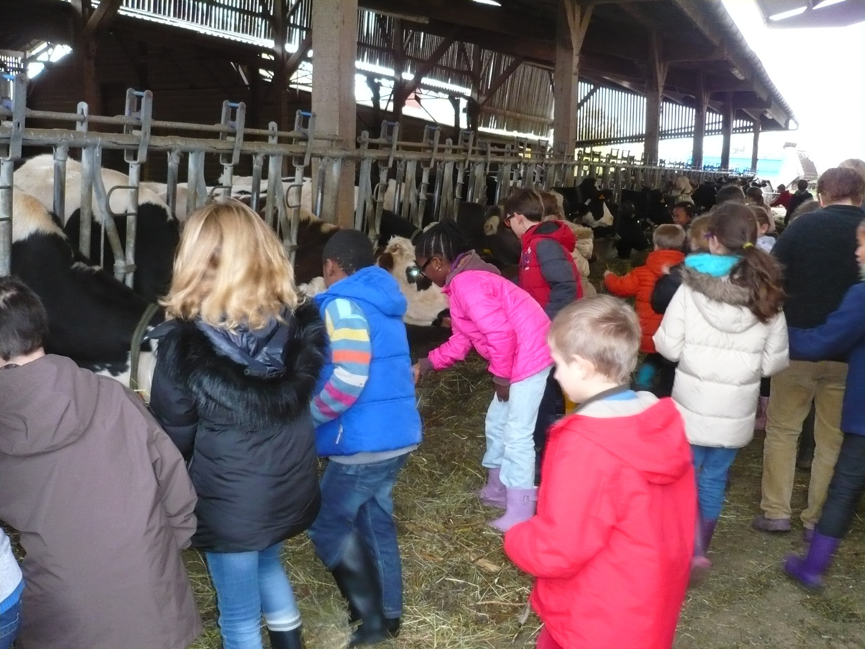 Séance de calins avec les vaches © UNAT Centre