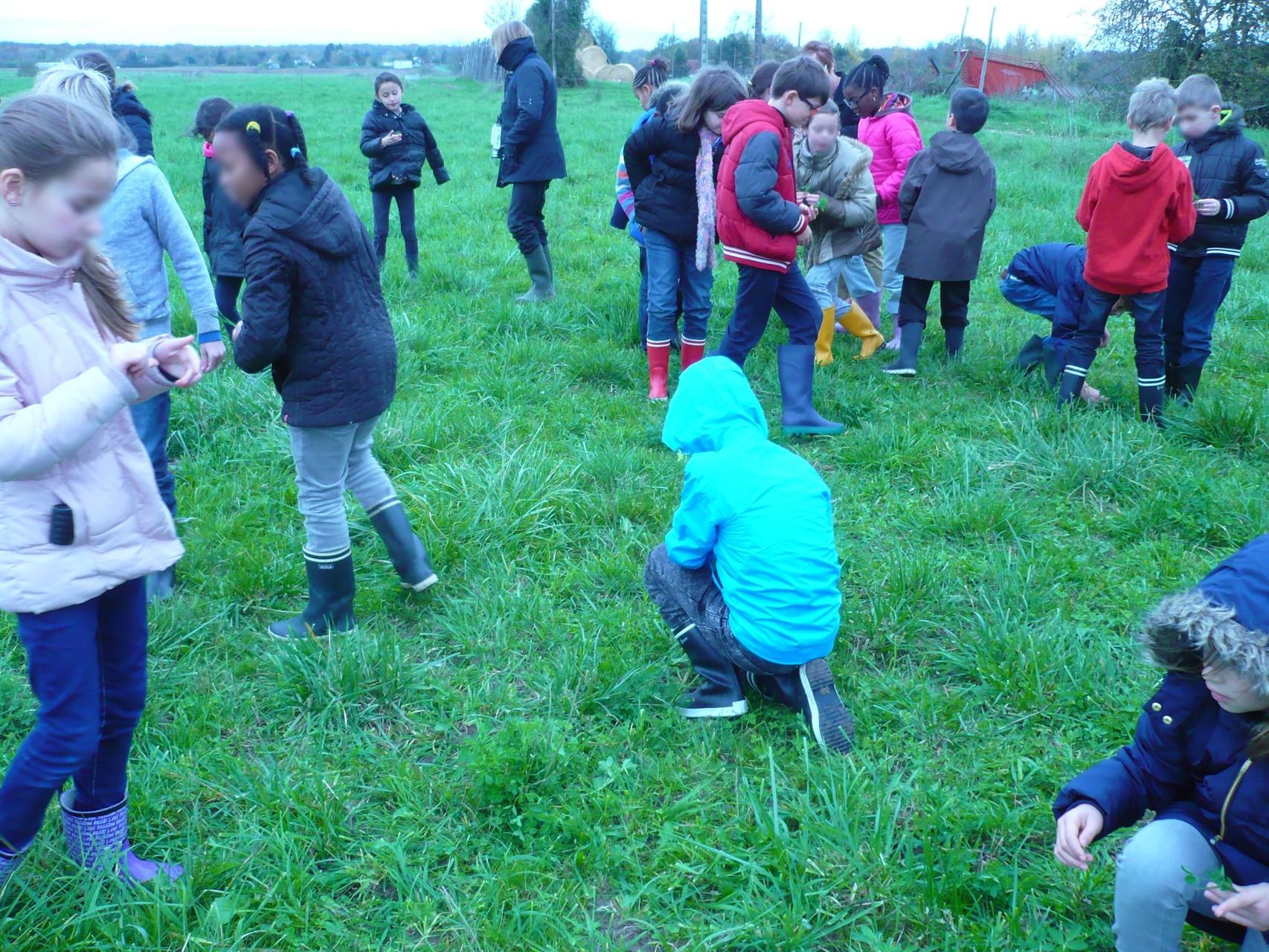 A la recherche des herbes préférées des vaches © UNAT Centre