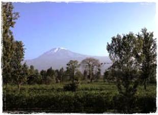 キリマンジャロ(標高 5,895m)