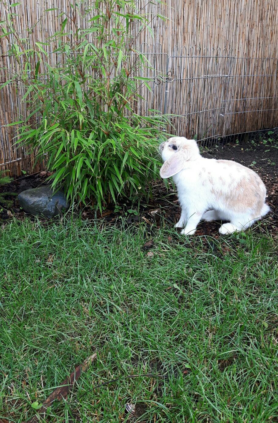 Einige unsere Kaninchen  rennen  auch frei im Garten  umher.  ;-)