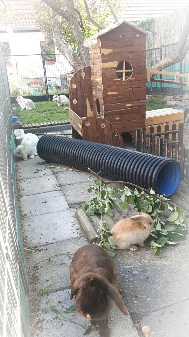 Unser neuer Kaninchen Turm  (2018)