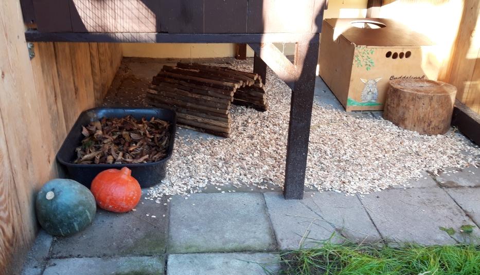 im Herbst gibt es immer einwenig Laub zum knabbern und buddeln.