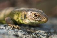 Eidechsen Frösche Salamander Echsen
