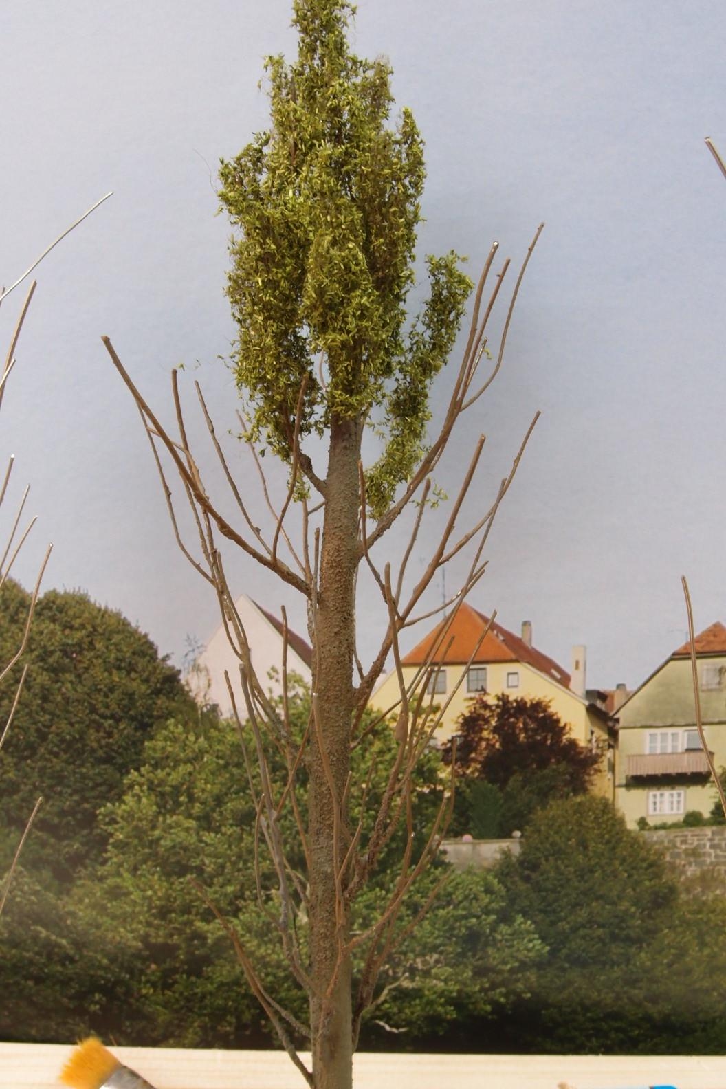 Baumspitze belaubt