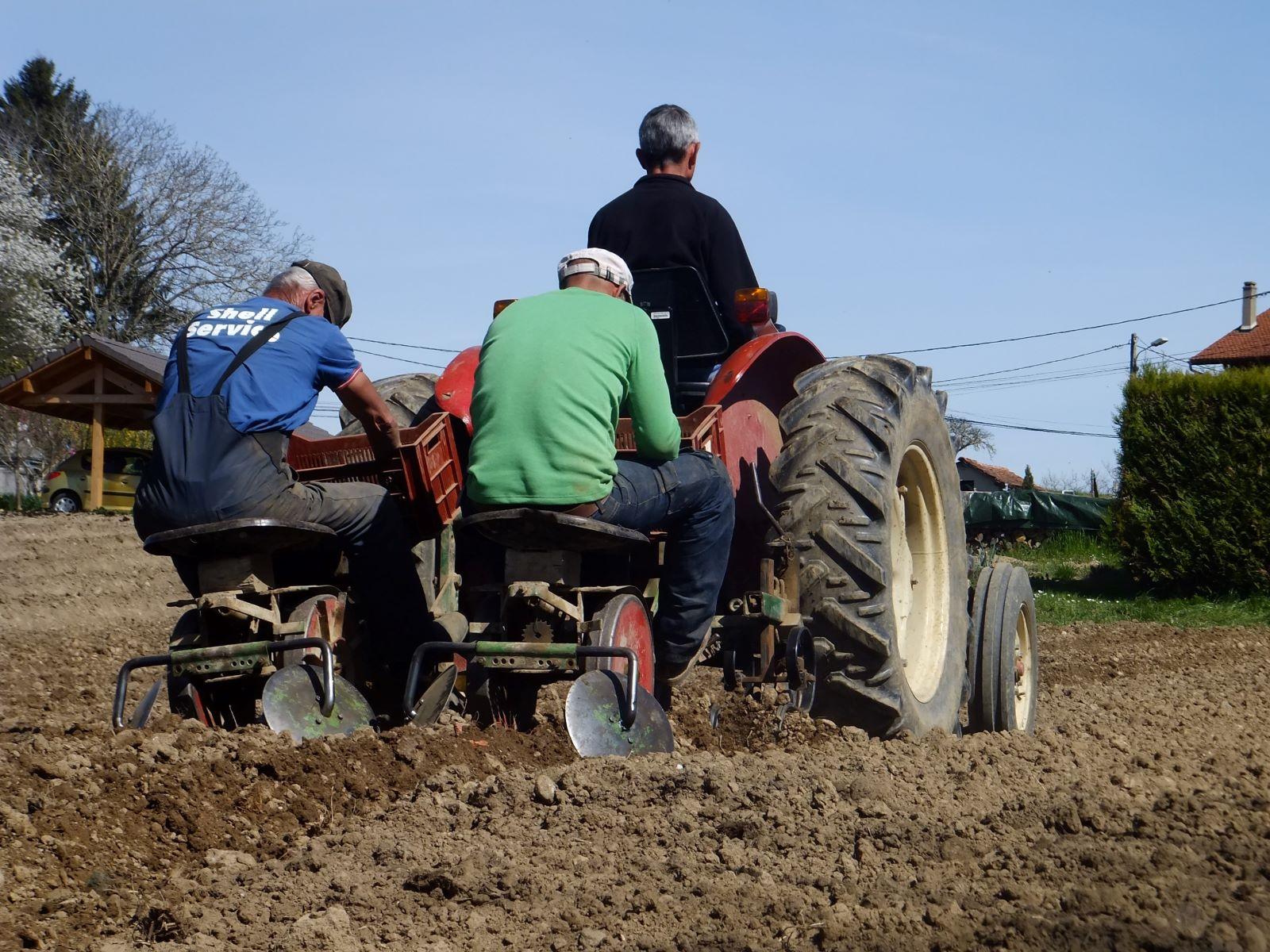 Avril - La plantation de Pommes de Terre est un travail d'équipe