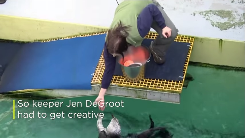 そこで飼育員のジェン・デグルートはクリエイティブにならなければなりませんでした。