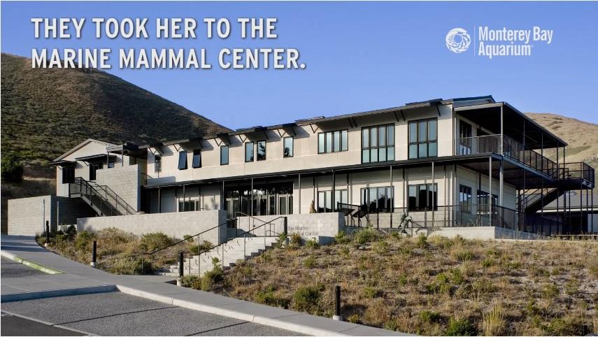 海洋哺乳類センターへ運んだ