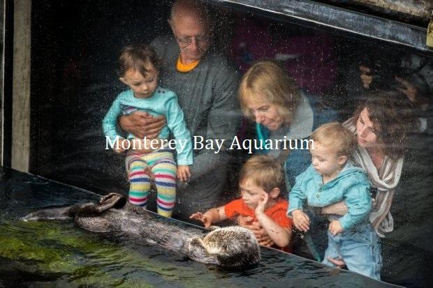 モントレーベイ水族館でラッコを見る親子