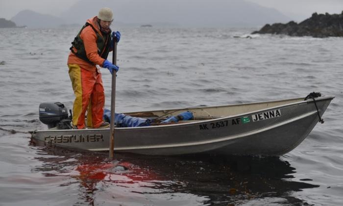 水面から死んだラッコを拾いあげるウィリアムス 写真:James Poulson