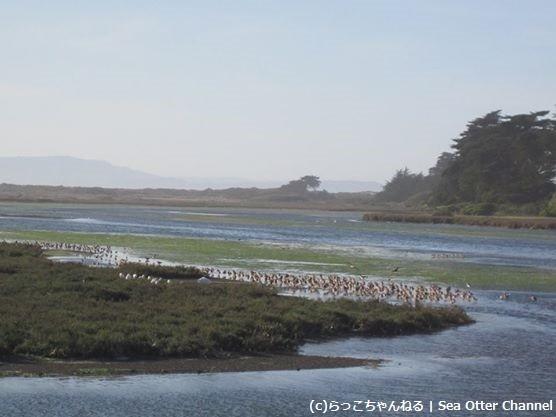 Moss Landingの鳥の群れ