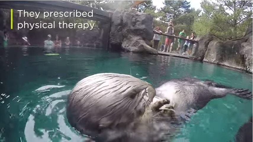 獣医らにより理学療法が処方されました。