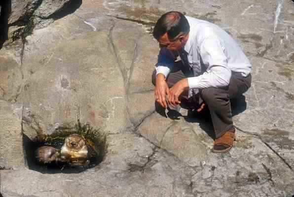 トーマス・ウィリアムス博士はモントレーベイ水族館の最初の獣医師になる前、自宅の浴槽でラッコの赤ちゃんを保護し育てていた。Courtesy photo