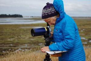 ミシェル・ステッドラーはモントレーベイ水族館のラッコプログラムと協働しエルクホーン湿地帯のラッコの行動を観察している。Photo by Cynthia McKelvey