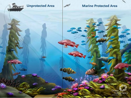 Image: Courtesy the Ocean Conservancy via the California Marine Sanctuary Foundation.