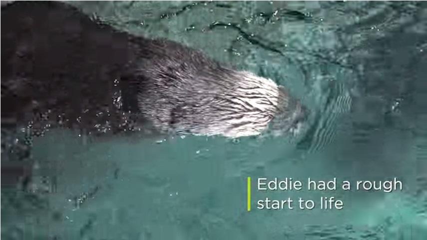 エディはその人生を辛いスタートで迎えました。