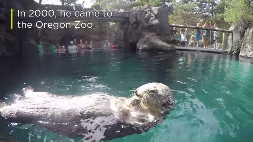 2000年にオレゴン動物園へやってきました。