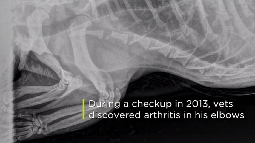 2013年、健康診断の際に肘に関節炎があることがわかり